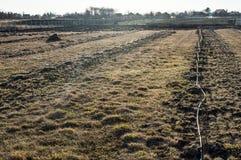 Irrigazione a goccia degli alberi da frutto Fotografia Stock Libera da Diritti