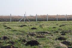 Irrigazione a goccia di giovani alberi da frutto Fotografia Stock Libera da Diritti