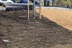 Irrigazione a goccia per le piante, installante il sistema dell'irrigazione a goccia Fotografia Stock Libera da Diritti