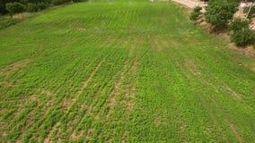 Irrigazione industriale - impianto di irrigazione che innaffia un campo dall'aria stock footage