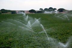 Irrigazione nei raccolti Fotografia Stock