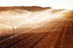Irrigazione nel campo di grano Immagine Stock