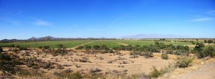Irrigazione nel deserto Fotografia Stock