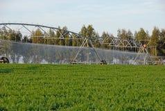 Irrigazione a pioggia per l'innaffiatura del campo coltivato Fotografia Stock