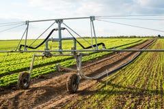 Irrigazione sui campi della lattuga Fotografia Stock