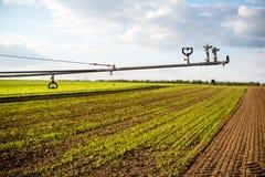 Irrigazione sui campi della lattuga Immagine Stock
