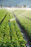 Irrigazione sul campo dell'azienda agricola Immagini Stock