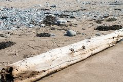 Driftwood on Beach with rocks and sea grass stock photos