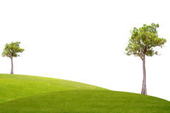 Irvingia malayana tree on green grass Royalty Free Stock Image