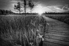 Irwin Prarie Sunset Royaltyfri Bild