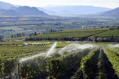 Irygacyjna kropidło winnicy wytwórnia win Zdjęcie Stock