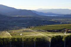 Irygacyjna kropidło winnicy wytwórnii win Okanagan dolina Fotografia Royalty Free
