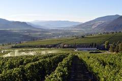 Irygacyjna kropidło winnicy wytwórnii win Okanagan dolina Zdjęcie Royalty Free