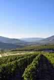 Irygacyjna kropidło winnicy wytwórnii win Okanagan dolina Obraz Royalty Free
