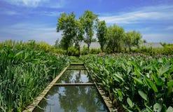 Irygacyjny kanał w trawiastych polach przed budować przy pogodnym summe Zdjęcia Stock
