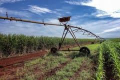 Irygacyjny pivot między trzciną cukrowa i kukurudz plantacjami we wnętrzu São Paulo, Brazylia Zdjęcie Royalty Free