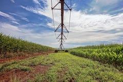 Irygacyjny pivot między trzciną cukrowa i kukurudz plantacjami we wnętrzu São Paulo, Brazylia Obrazy Royalty Free