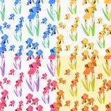 Irysów kwiaty ustawiają bezszwowego światło również zwrócić corel ilustracji wektora Zdjęcie Stock