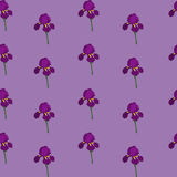 irys bezszwowy kwiecisty wzoru Kwitnie teksturę Obraz Royalty Free