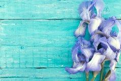Irys kwitnie na turkusowym nieociosanym drewnianym tle z pustym sp Obraz Stock