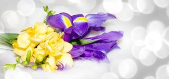 Irysa i frezja kwiatu ilustracja Obrazy Royalty Free