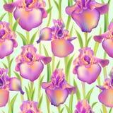 Irysa lis kwiatu bezszwowy wzór Obrazy Stock