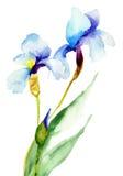 Irysowi kwiaty Fotografia Royalty Free