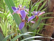 Irysowy kwiat - Stubarwny Zdjęcia Stock