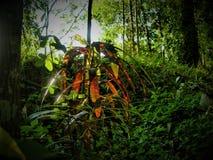 Iryzuje zieleń liście w Azji Południowo Wschodniej dżungli obrazy stock