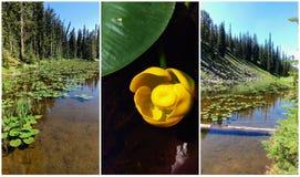 Isa Lake Collage - Yellowstone stock afbeelding