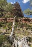 Isaac Peak et arbres Zion National Park Utah photo libre de droits