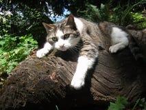 Isabel Driftwood Stockbilder