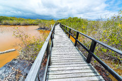 Isabela Island Boardwalk Royalty Free Stock Image
