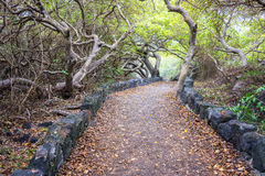 Isabela Island Path Royalty Free Stock Photo