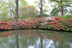 Isabella Gardens in bloei Royalty-vrije Stock Afbeeldingen