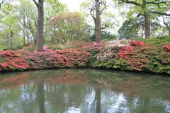 Isabella Gardens i blom Royaltyfria Bilder