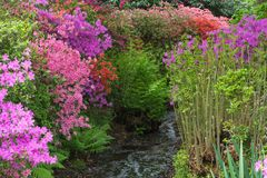 Isabella Plantation in Richmond Park stock image