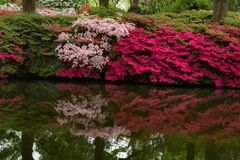Isabella Plantation, Richmond Park royalty-vrije stock afbeelding