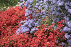 Isabella Plantation, Richmond Park stock fotografie