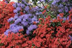Isabella Plantation, Richmond Park royalty-vrije stock foto
