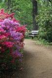Isabella Plantation, Richmond Park stock foto