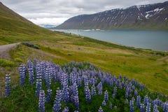 Isafjordur Town Stock Photos