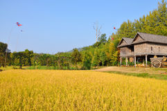 Isan village Royalty Free Stock Photography