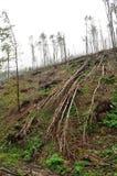 Isavbrott i skogbokträdskogen arkivfoto