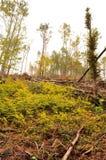 Isavbrott i skogbokträdskogen arkivfoton