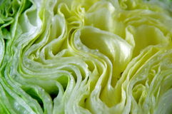 Isberggrönsallat. Arkivbilder
