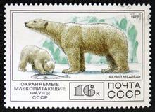 Isbjörn circa 1977 Arkivfoton