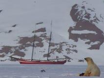 Isbjörn på havsis med skeppet och berget Royaltyfri Bild
