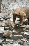 Isbjörnar och barn Arkivbilder