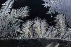 Isblommor - frostmodell Royaltyfri Bild
